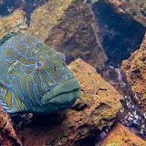 galapagos - Galapagos_FB_2-61.jpg