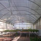 manejo de viveros - laboratorio%2Be%2Binvernadero%2Brustificacion%2B002.jpg