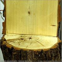 Robinia pseudoacacia - Robinia akacjowa przekrój pnia, słoje