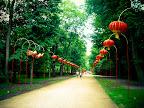 Čínska aleja v Łazienki Parku