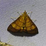 Crambidae. Choachi, 1850 m (Cundinamarca, Colombie), 10 novembre 2015. Photo : J.-M. Gayman