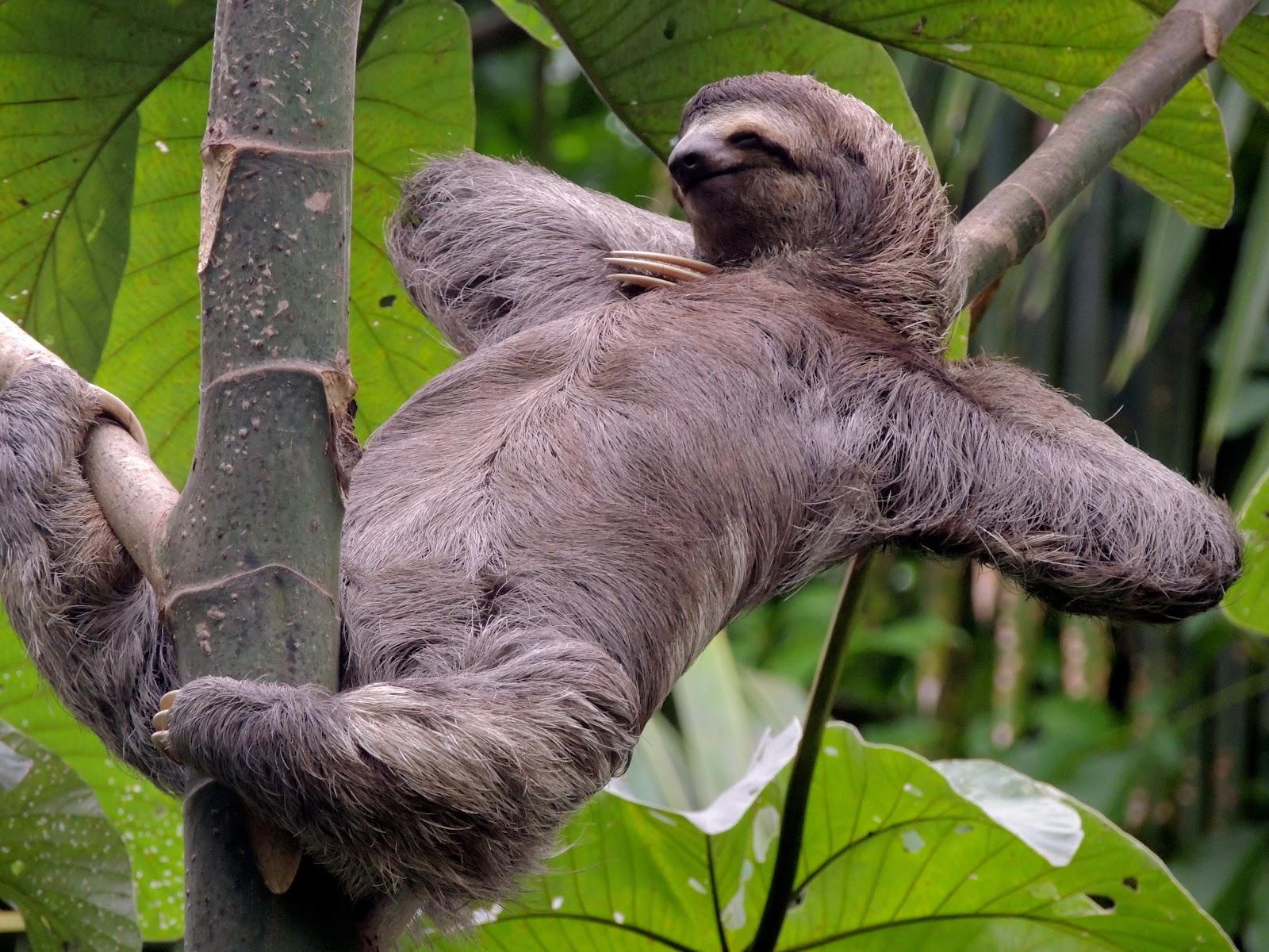 [sloth%5B4%5D]