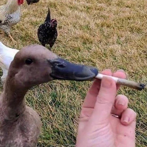 user despayeeto apkdeer profile image