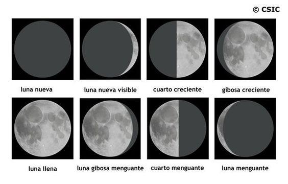 cuales son las fases de la luna