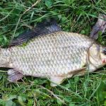 20140817_Fishing_Pugachivka_028.jpg
