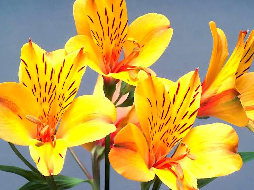 Orchidea_flowers.jpg