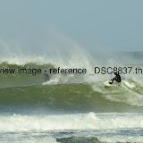 _DSC8837.thumb.jpg