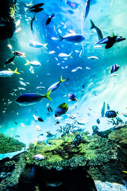 Miyajima Public Aquarium6