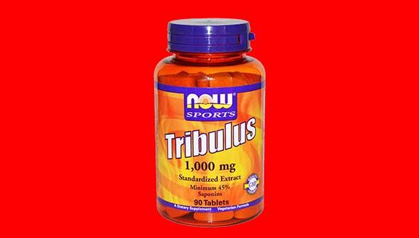 Triburas