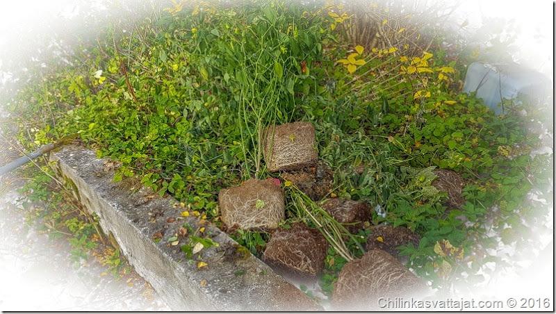komposti (1 of 1)