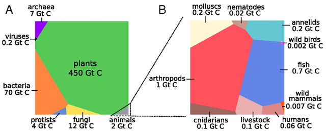 Graphical representation of the global biomass distribution by taxa. (A) Absolute biomasses of different taxa are represented using a Voronoi diagram, with the area of each cell being proportional to that taxa global biomass (the specific shape of each polygon carries no meaning). This type of visualization is similar to pie charts but has a much higher dynamic range. Graphic: Bar-On, et al., 2018 / PNAS