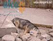 1era visita asistencia animales damnificados terremoto  Pisco 2007 (2)