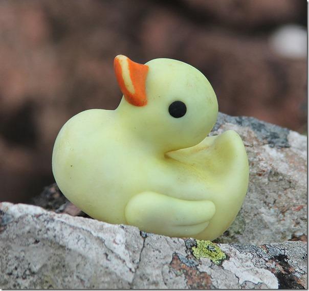 6 duck