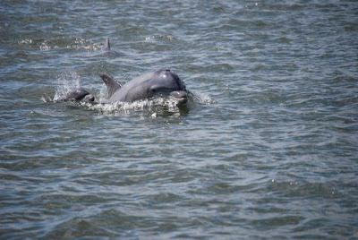Mom & baby dolphin, pic taken by Geoff Secker