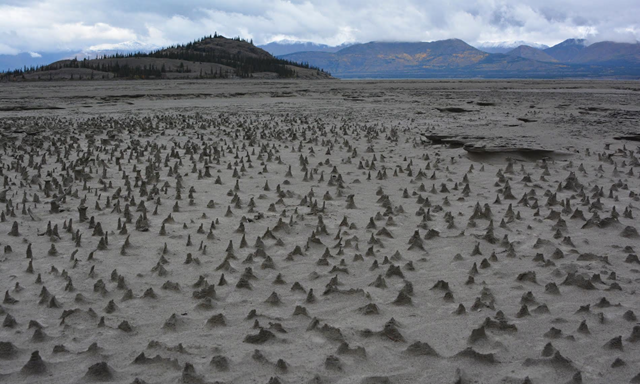 "Sections of the newly exposed bed of Kluane Lake contain small pinnacles. Wind has eroded sediments with a harder layer on top that forms a protective cap as the wind erodes softer and sandier sediment below. These pinnacles, just a few centimeters high, are small-scale versions of what are sometimes termed ""hoodoos."" Photo: Jim Best / University of Illinois"
