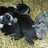 litter @ 2 weeks