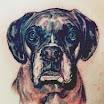 Steve's Dog