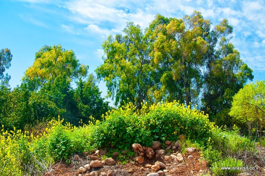 Природа Верхней Галилеи.