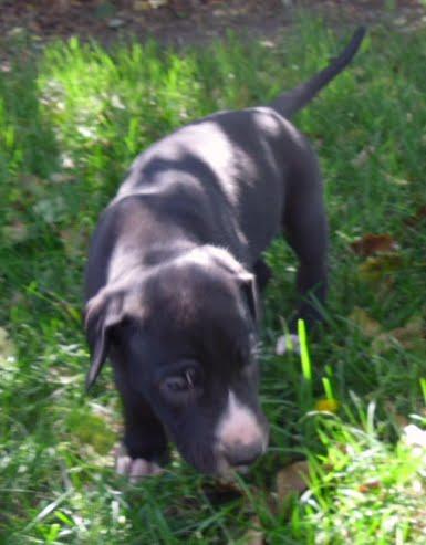 Stella @ 5 weeks