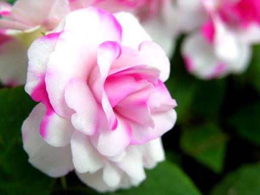 Mooie_bloem.jpg