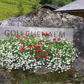 Rauris - Gollehenalm - Palfneralm  (Seidlwinkltal)