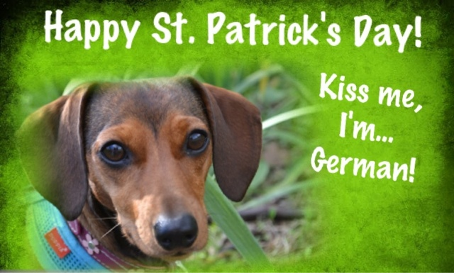 Image result for dachshund st patrick's day images
