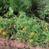 Gardening 2010, Part Three - 101_3640.JPG