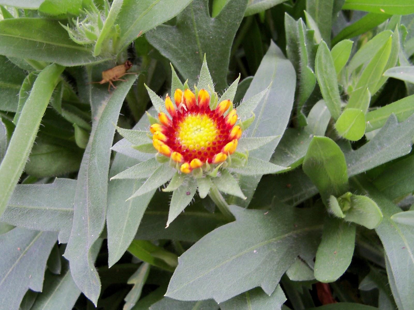 Gardening 2011 - 100_7273.JPG