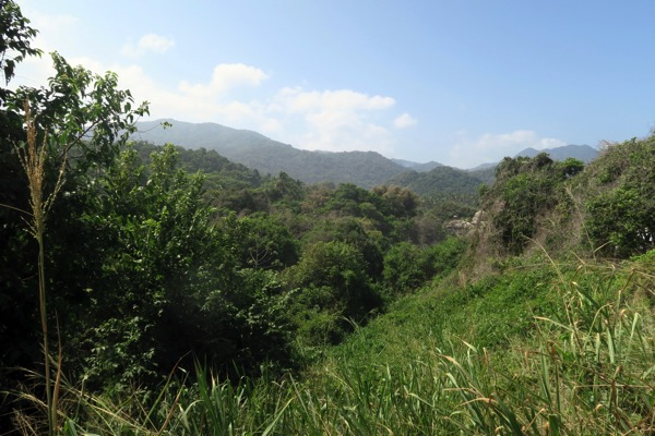 Jungle behind stones