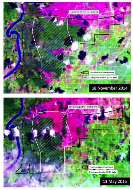 Satellite imagery from Greenomics-Indonesia's report on Sawit Sumbermas Sarana's forest destruction in Central Kalimantan.