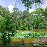 06-15-14 Memphis TN Suburban Park - IMGP1403.JPG