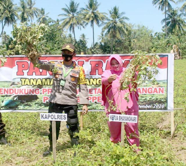 Dukung Kampung Tangguh ditengah Pandemi, Polres Soppeng Gelar Panen Raya