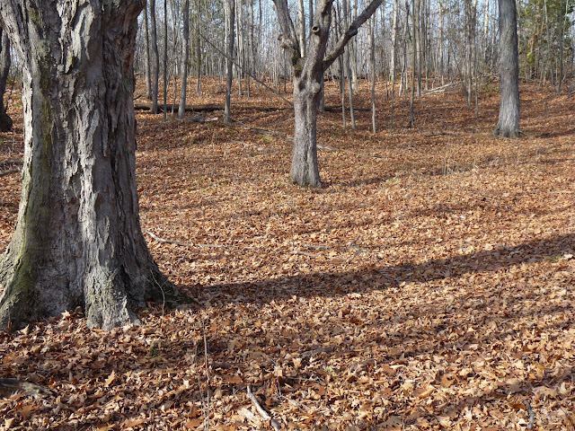 Decomposing leaves on the forest floor is a typical November smell