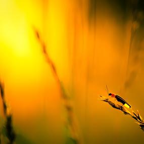 Kingdom by Chris Martin - Digital Art Animals ( fireflies, nature, sunset, summer, sunrise, firefly, lightningbug,  )