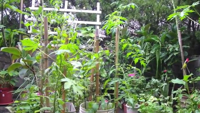 Balcony container plants