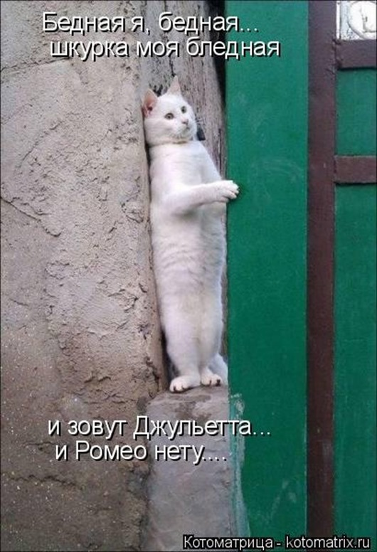 1469207209_kotomatrica-33