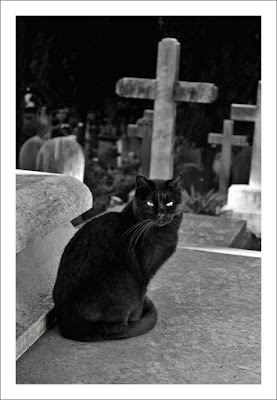 Cimitero degli Inglesi di Saragypsy