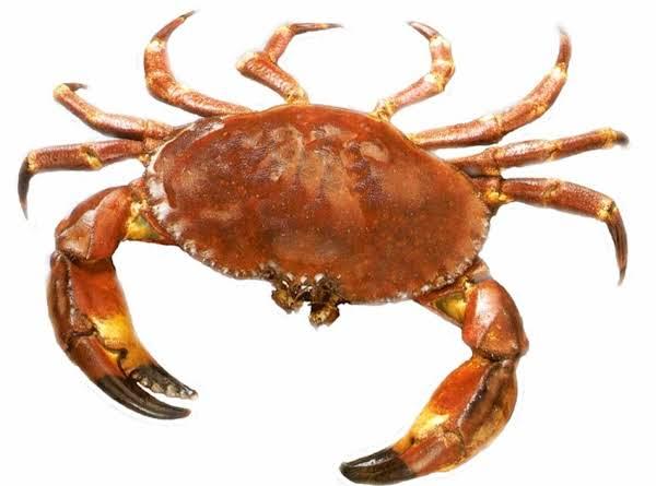 Sautéed Back Fin Crab Meat