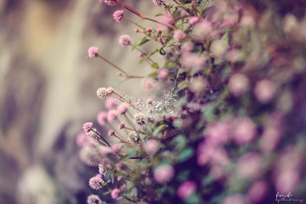 Va nhung bui hoa dai lo tho trong gio mua xuan Sapa
