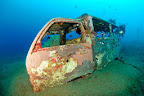 The car wrecks are not only among the sea creatures popular, but with scuba divers as well.