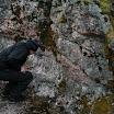 Kallioperägeologian kenttäkurssi, kevät 2012 - Kallioper%25C3%25A4kenttis%2B010.JPG