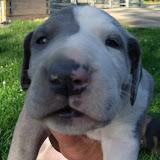 Serena & Jaspers 5-13-12 litter - SAM_3812.JPG