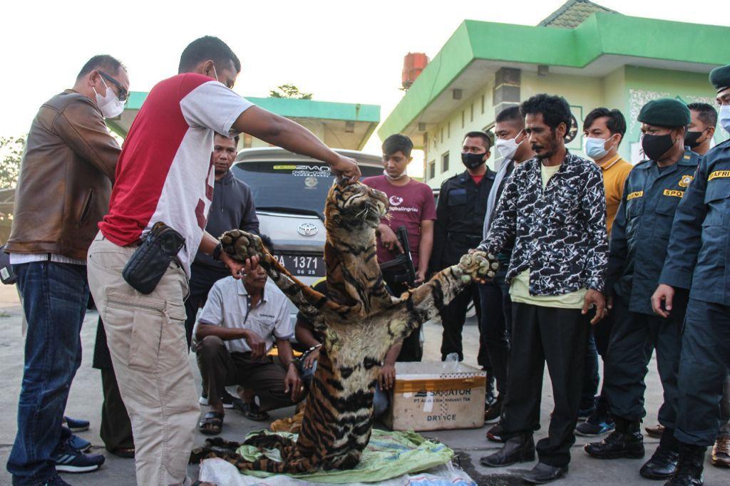 Tim Gabungan Subdit IV Krimsus Bersama Petugas BKSDA Tangkap 4 Pelaku Perdagangan Satwa Dilindungi