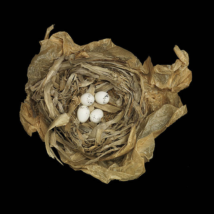 Birds Nests Photography by Sharon Beals Seen On www.coolpicturegallery ...