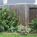 Gardening 2013 - 115_6053.JPG