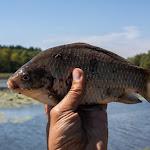 20150802_Fishing_Virlia_044.jpg