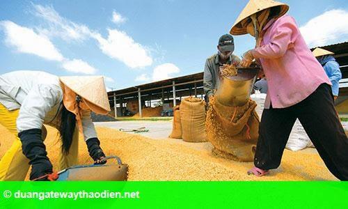 Hình 1: Vốn rót nhiều, nông dân vẫn nghèo