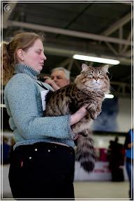 cats-show-24-03-2012-fife-spb-www.coonplanet.ru-086.jpg