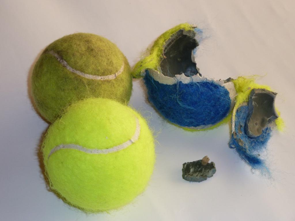Pelotas de tenis peligrosas para los perros