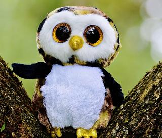 Mitos Tentang Burung Hantu Dari Anggapan Berbagai Macam Negara Geeglehayoo